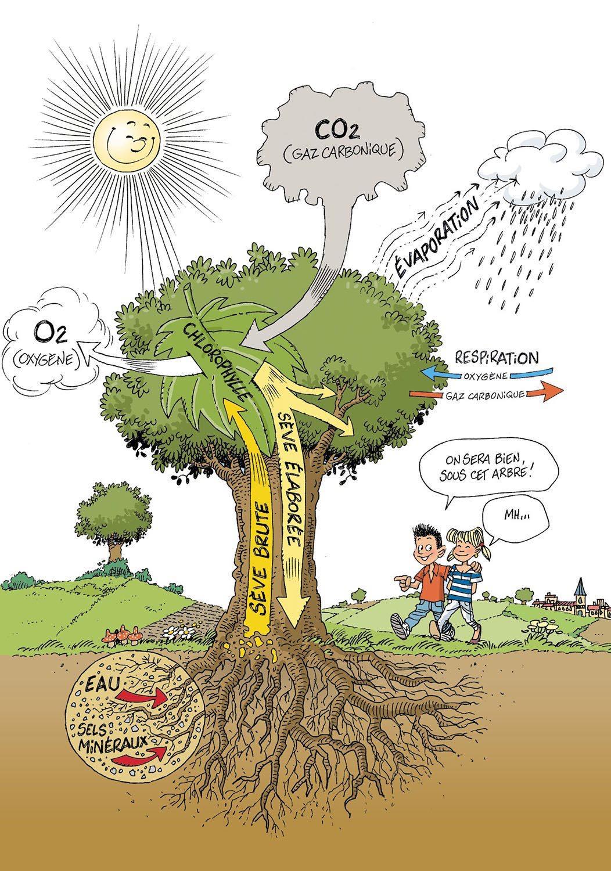 arbre remède